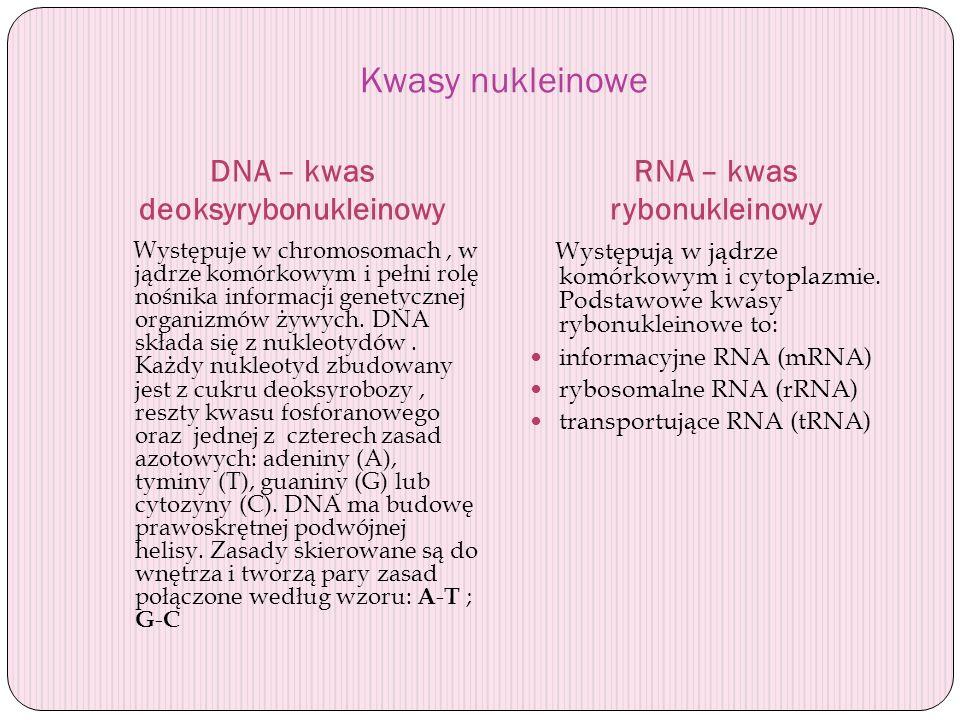 DNA – kwas deoksyrybonukleinowy RNA – kwas rybonukleinowy