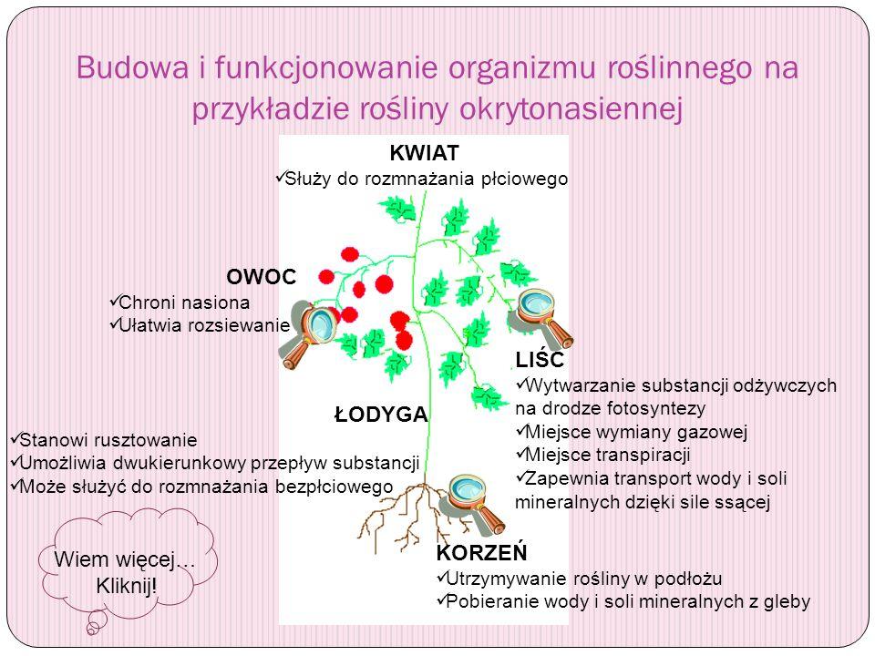 Budowa i funkcjonowanie organizmu roślinnego na przykładzie rośliny okrytonasiennej
