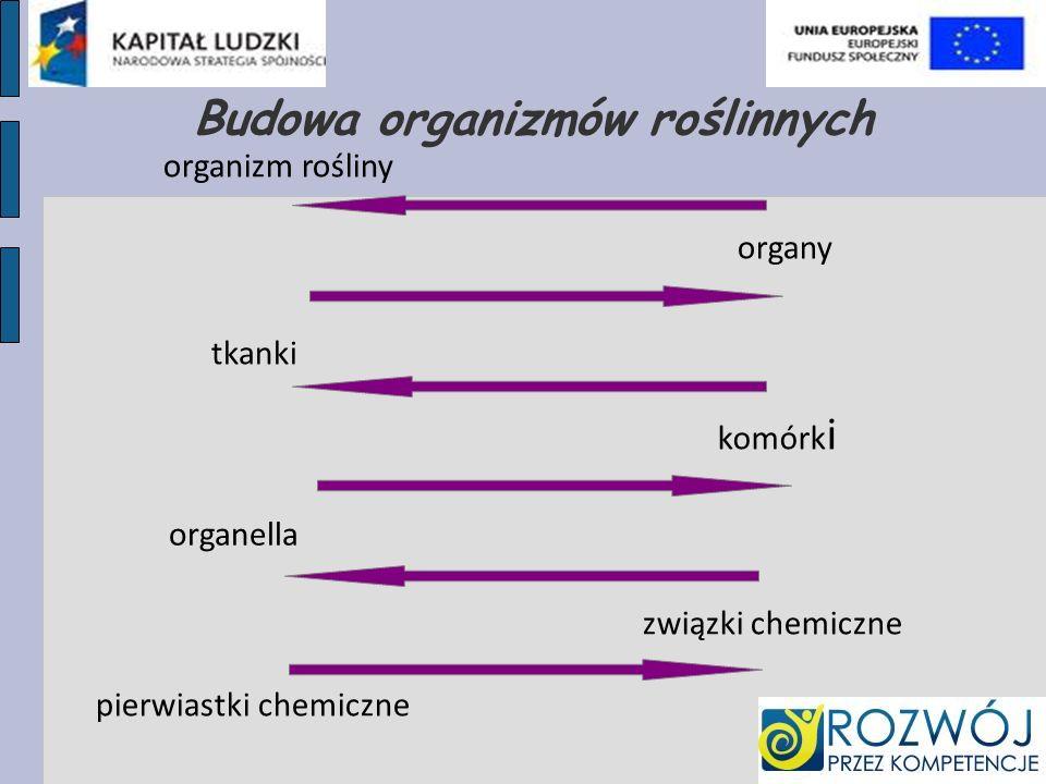 Budowa organizmów roślinnych