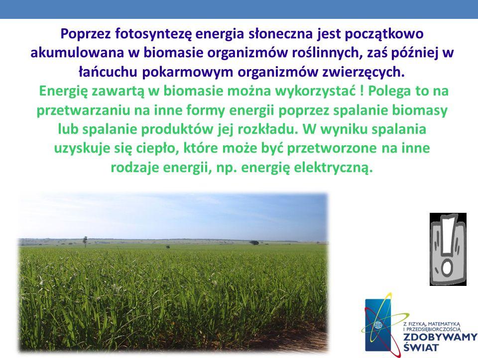 Poprzez fotosyntezę energia słoneczna jest początkowo akumulowana w biomasie organizmów roślinnych, zaś później w łańcuchu pokarmowym organizmów zwierzęcych.