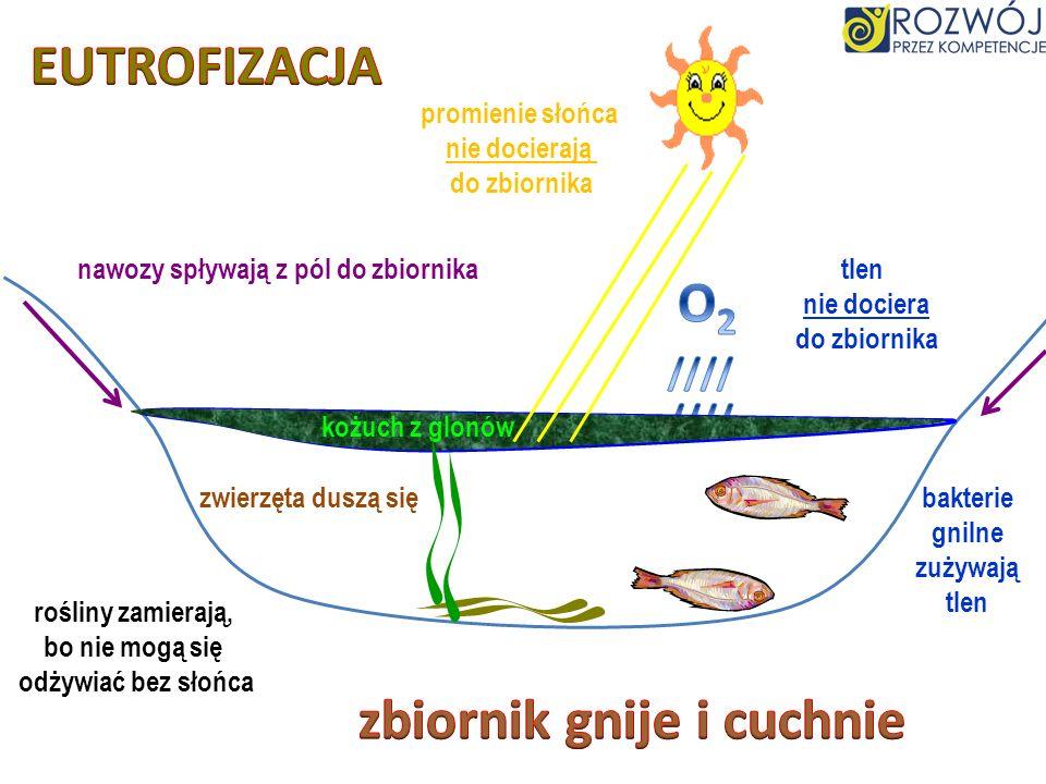 nawozy spływają z pól do zbiornika zbiornik gnije i cuchnie