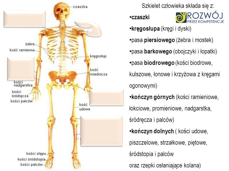 Szkielet człowieka składa się z: