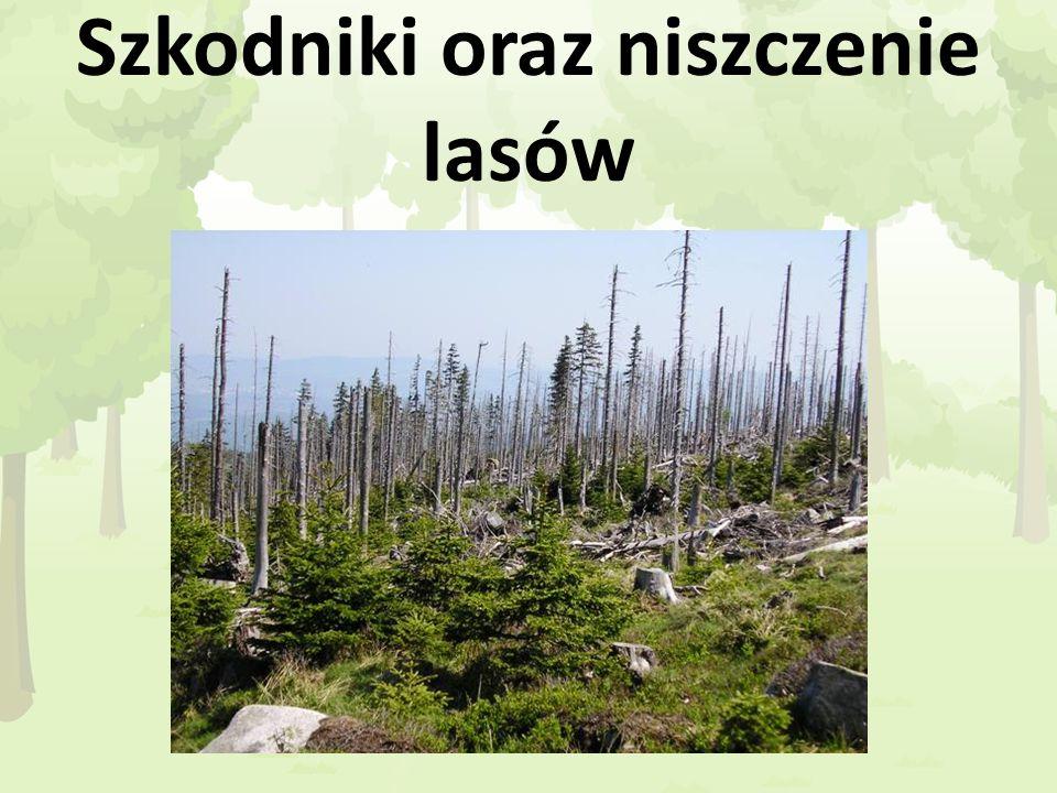 Szkodniki oraz niszczenie lasów