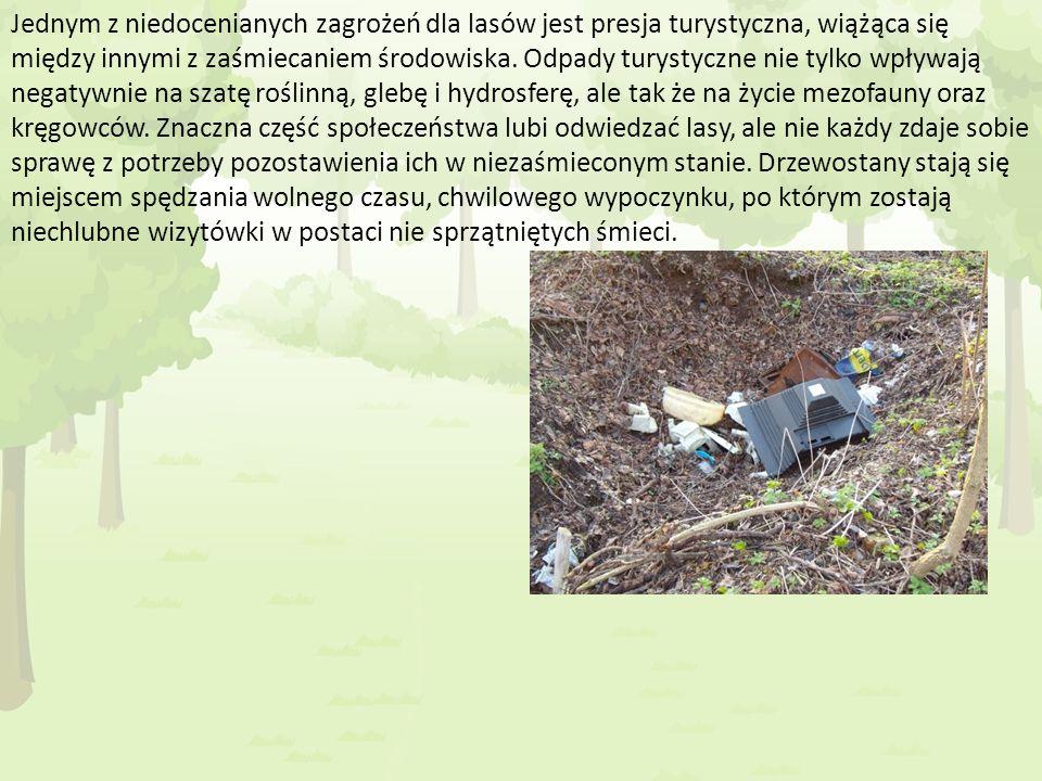 Jednym z niedocenianych zagrożeń dla lasów jest presja turystyczna, wiążąca się między innymi z zaśmiecaniem środowiska.
