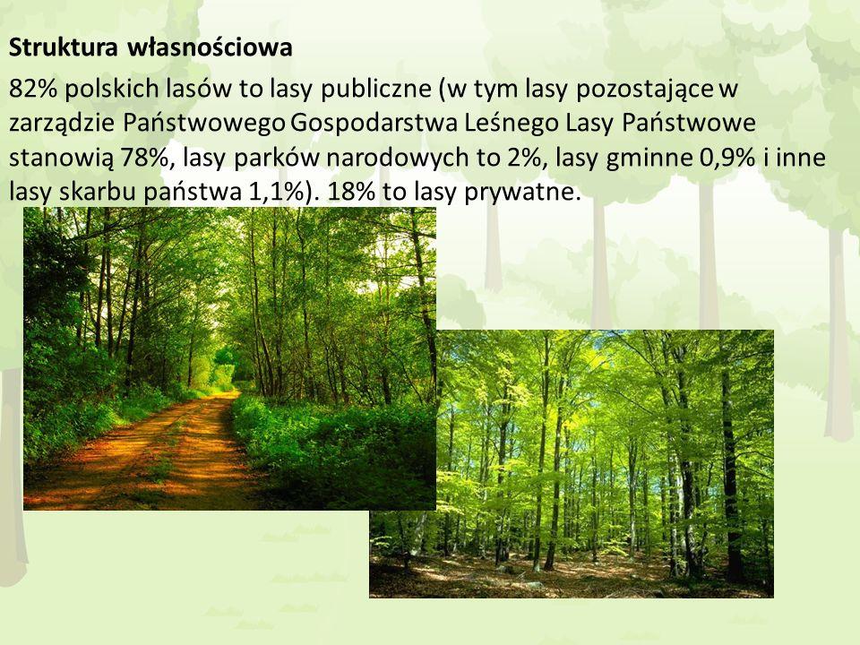 Struktura własnościowa 82% polskich lasów to lasy publiczne (w tym lasy pozostające w zarządzie Państwowego Gospodarstwa Leśnego Lasy Państwowe stanowią 78%, lasy parków narodowych to 2%, lasy gminne 0,9% i inne lasy skarbu państwa 1,1%).