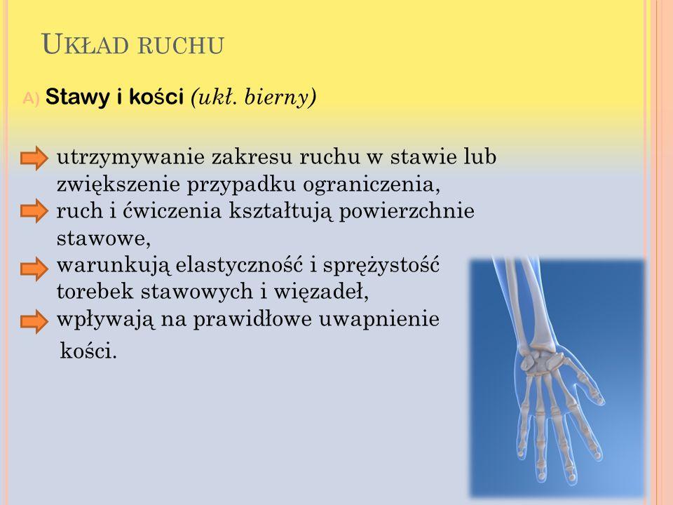 Układ ruchu A) Stawy i kości (ukł. bierny)
