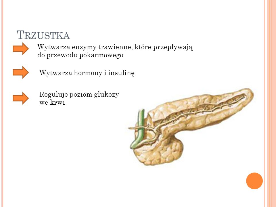 Trzustka Wytwarza enzymy trawienne, które przepływają do przewodu pokarmowego. Wytwarza hormony i insulinę.