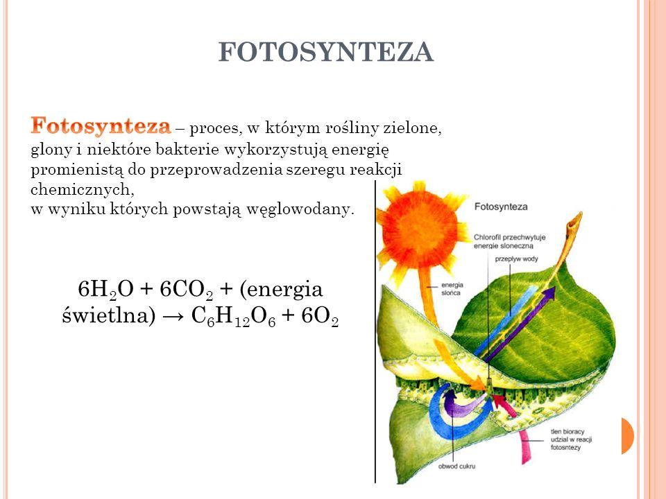 6H2O + 6CO2 + (energia świetlna) → C6H12O6 + 6O2