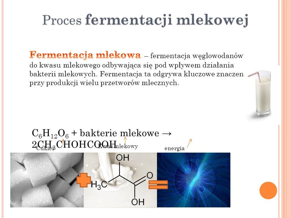 Proces fermentacji mlekowej
