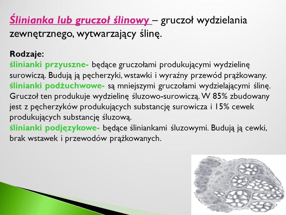 Ślinianka lub gruczoł ślinowy – gruczoł wydzielania zewnętrznego, wytwarzający ślinę.