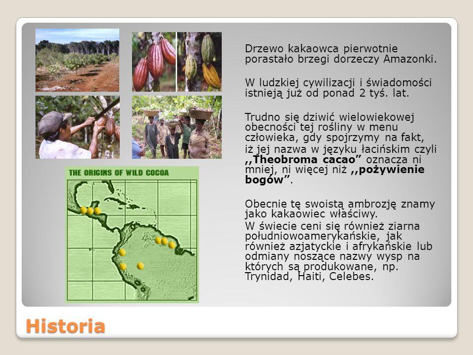 Drzewo kakaowca pierwotnie porastało brzegi dorzeczy Amazonki.