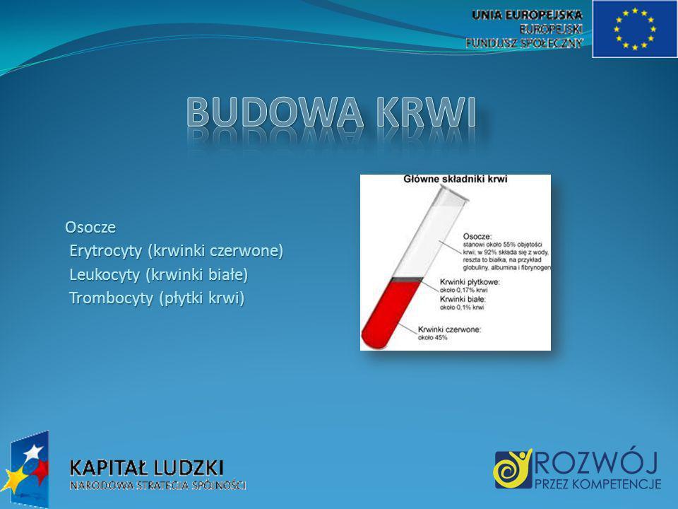 BUDOWA KRWI Osocze Erytrocyty (krwinki czerwone) Leukocyty (krwinki białe) Trombocyty (płytki krwi)