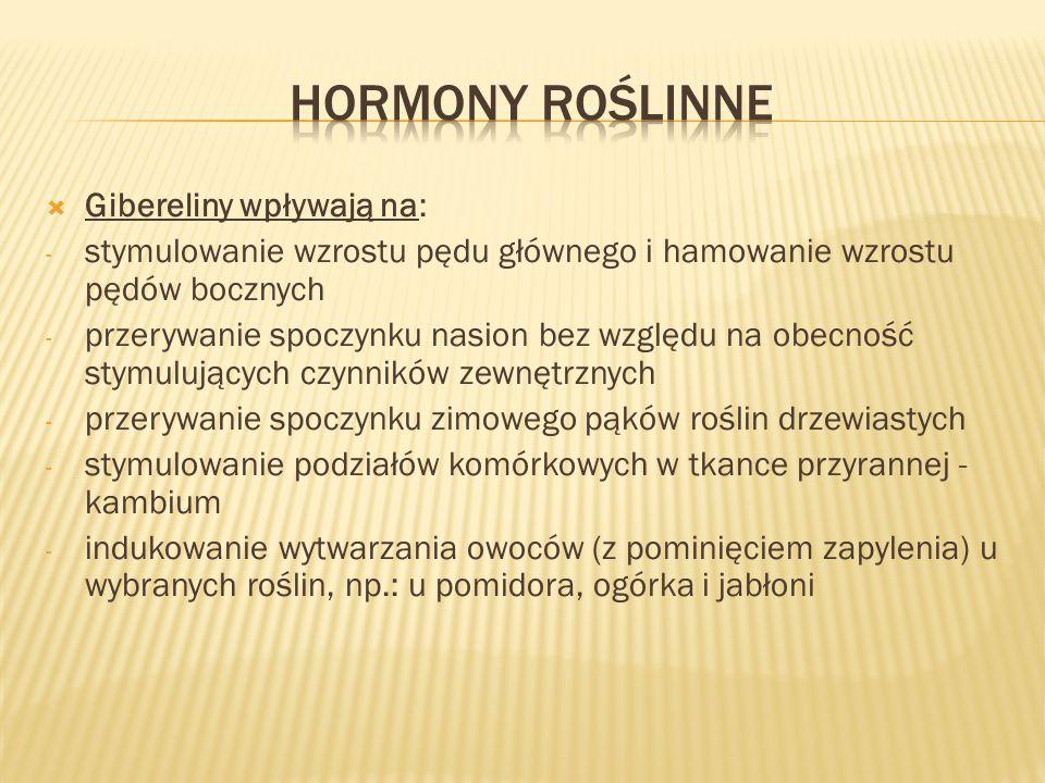 Hormony roślinne Gibereliny wpływają na: