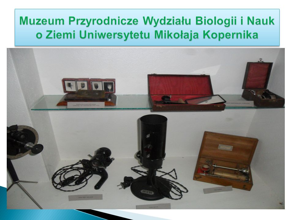 Muzeum Przyrodnicze Wydziału Biologii i Nauk o Ziemi Uniwersytetu Mikołaja Kopernika
