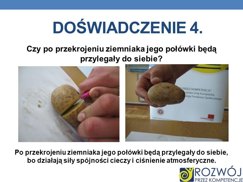 Czy po przekrojeniu ziemniaka jego połówki będą przylegały do siebie