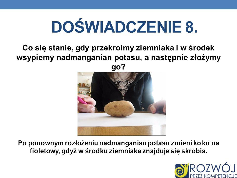 Doświadczenie 8. Co się stanie, gdy przekroimy ziemniaka i w środek wsypiemy nadmanganian potasu, a następnie złożymy go