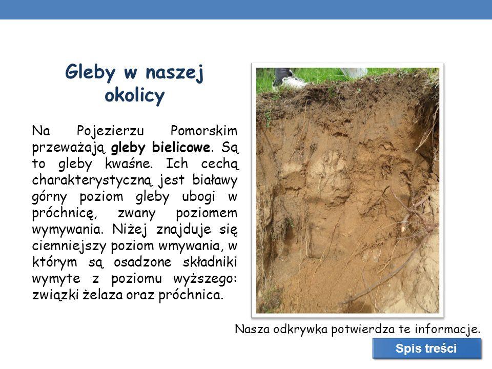 Gleby w naszej okolicy