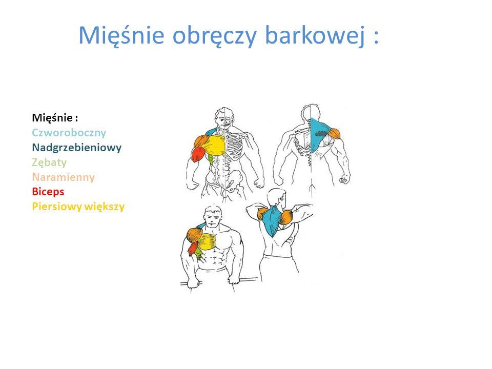 Mięśnie obręczy barkowej :