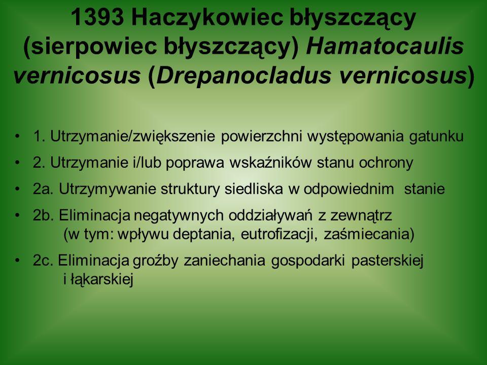 1393 Haczykowiec błyszczący (sierpowiec błyszczący) Hamatocaulis vernicosus (Drepanocladus vernicosus)