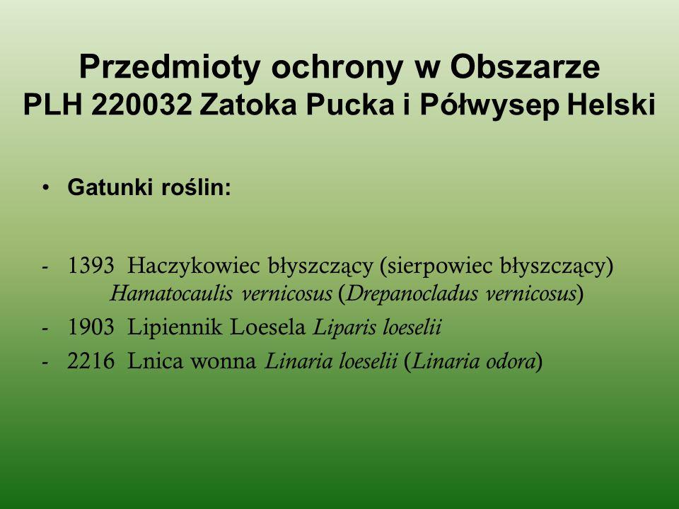 Przedmioty ochrony w Obszarze PLH 220032 Zatoka Pucka i Półwysep Helski
