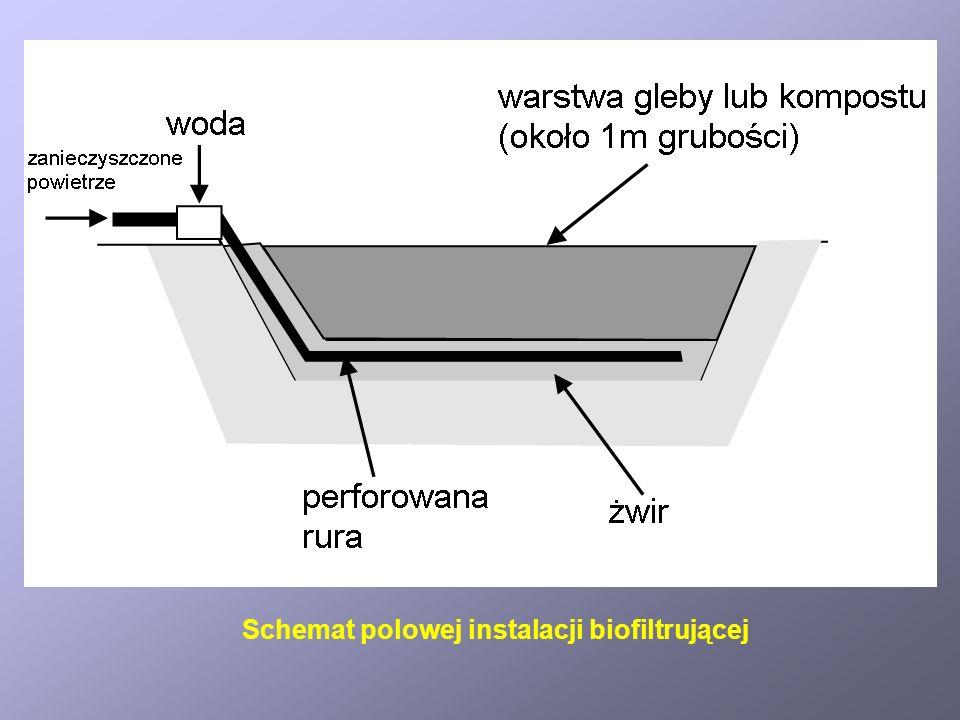 Schemat polowej instalacji biofiltrującej