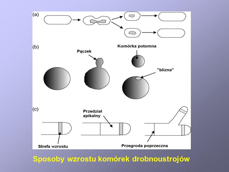 Sposoby wzrostu komórek drobnoustrojów