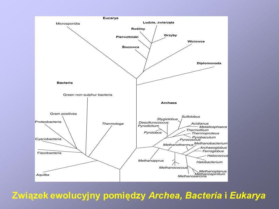 Związek ewolucyjny pomiędzy Archea, Bacteria i Eukarya