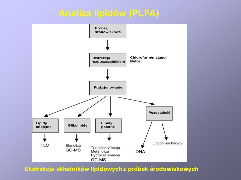 Analiza lipidów (PLFA)