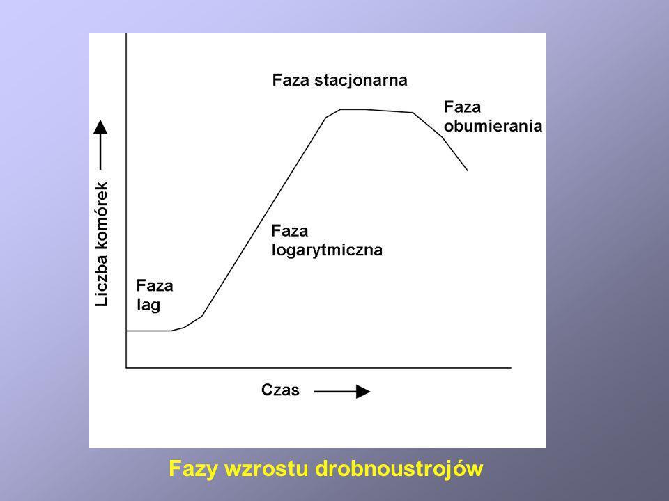 Fazy wzrostu drobnoustrojów