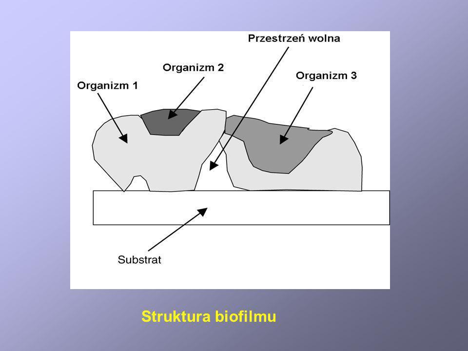 Struktura biofilmu