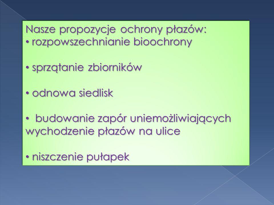 Nasze propozycje ochrony płazów: