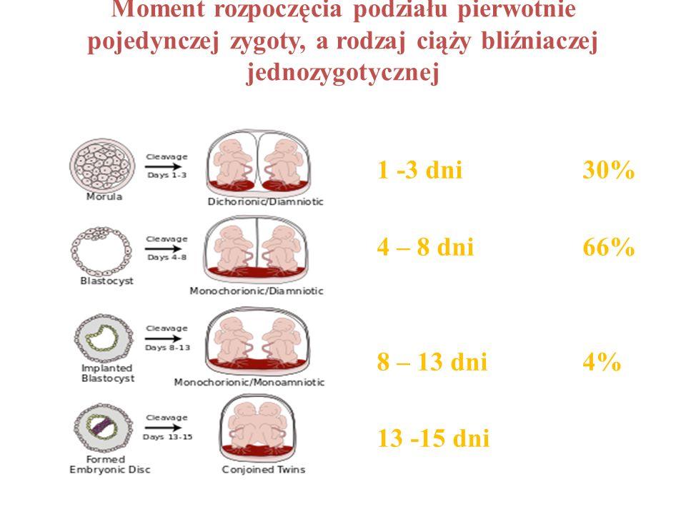 Moment rozpoczęcia podziału pierwotnie pojedynczej zygoty, a rodzaj ciąży bliźniaczej jednozygotycznej