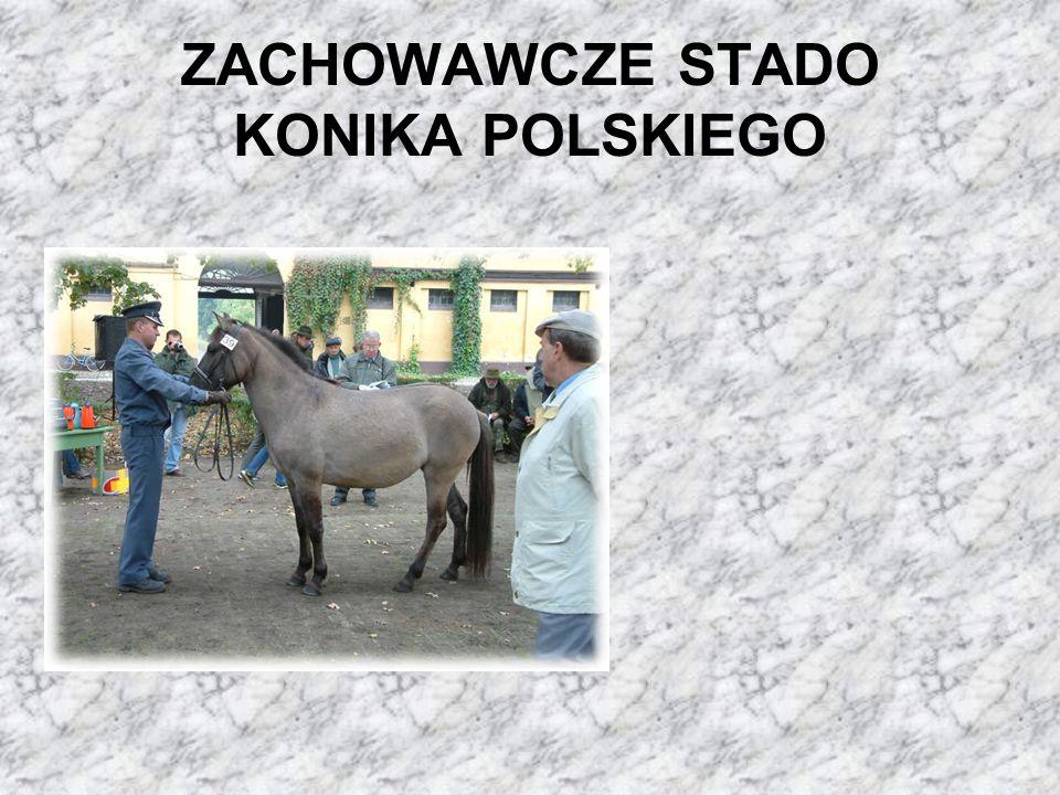 ZACHOWAWCZE STADO KONIKA POLSKIEGO