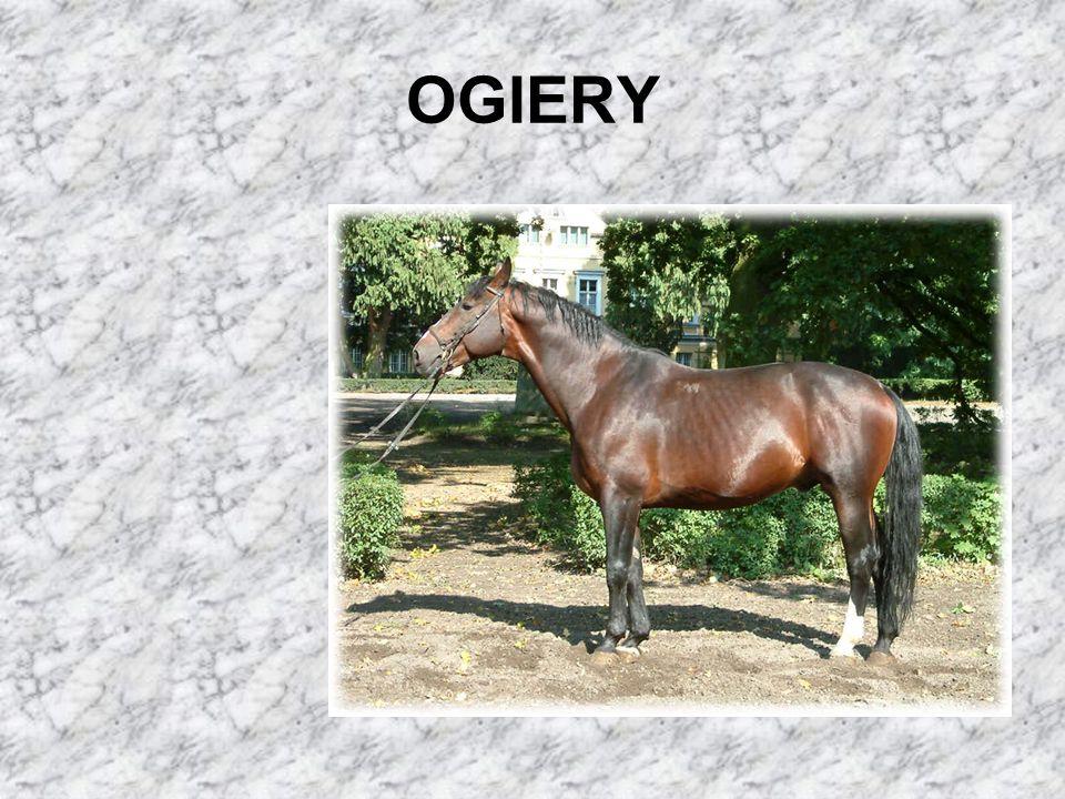 OGIERY