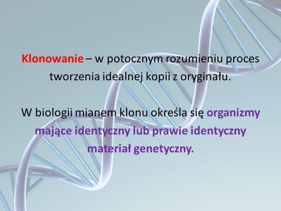 Klonowanie – w potocznym rozumieniu proces tworzenia idealnej kopii z oryginału.
