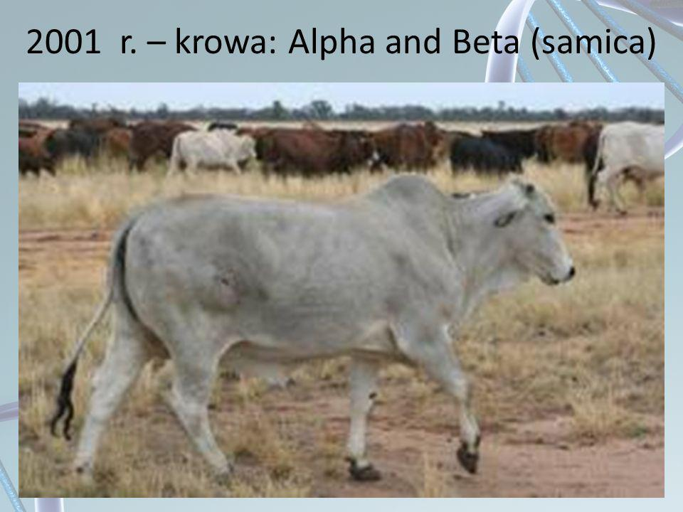 2001 r. – krowa: Alpha and Beta (samica)