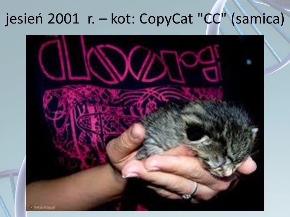 jesień 2001 r. – kot: CopyCat CC (samica)