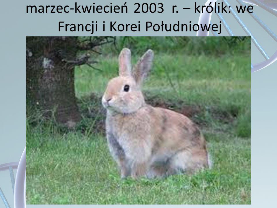 marzec-kwiecień 2003 r. – królik: we Francji i Korei Południowej