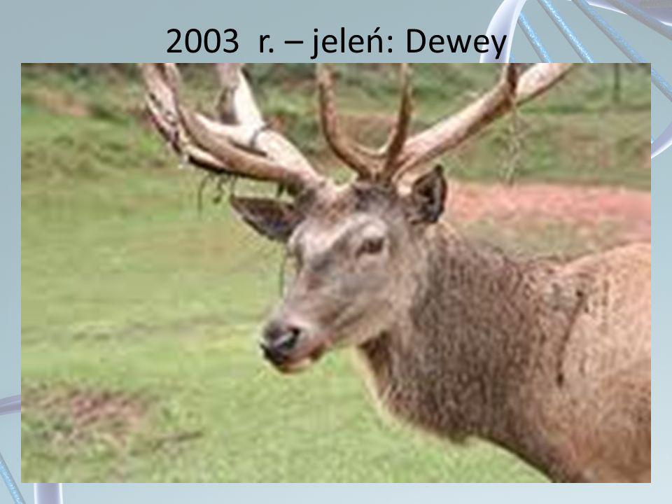 2003 r. – jeleń: Dewey