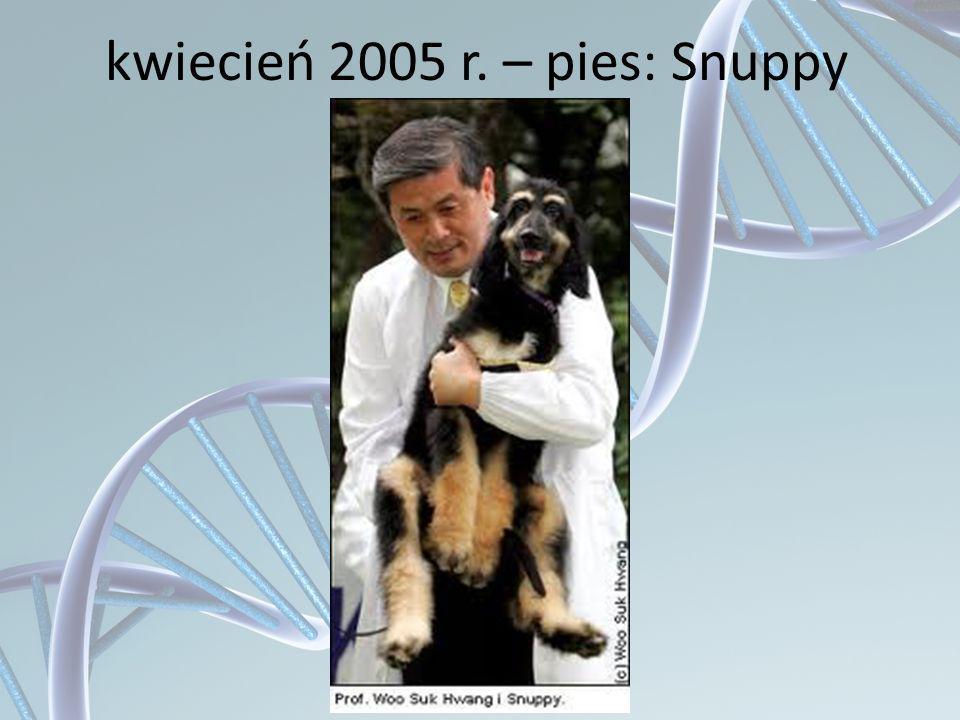 kwiecień 2005 r. – pies: Snuppy