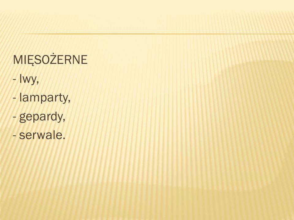 MIĘSOŻERNE - lwy, - lamparty, - gepardy, - serwale.