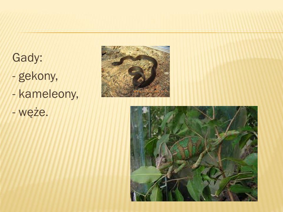 Gady: - gekony, - kameleony, - węże.