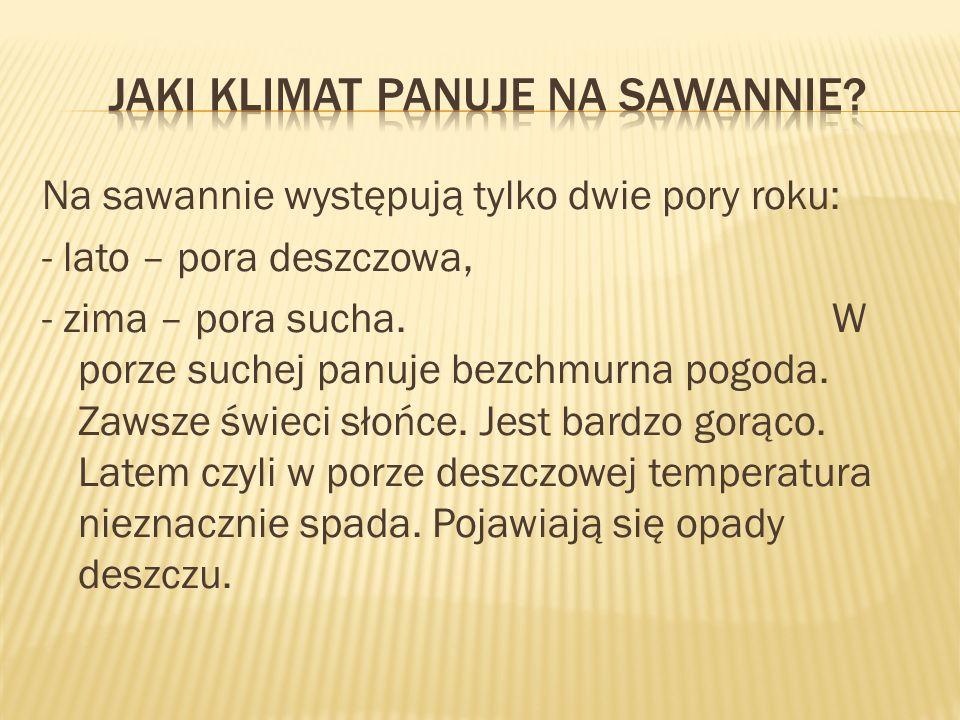 Jaki klimat panuje na sawannie