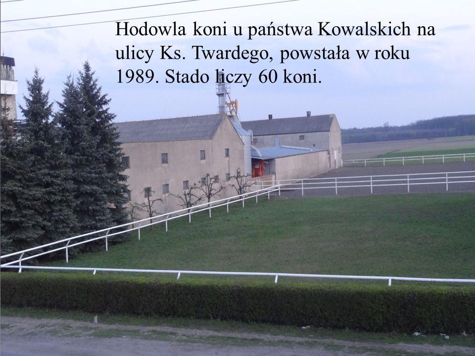 Stadnina koni Hodowla koni u państwa Kowalskich na ulicy Ks. Twardego, powstała w roku 1989. Stado liczy 60 koni.