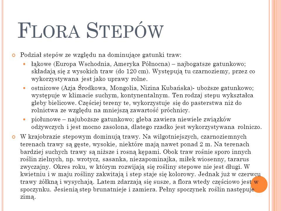 Flora Stepów Podział stepów ze względu na dominujące gatunki traw: