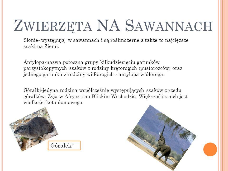 Zwierzęta NA Sawannach