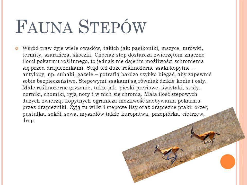 Fauna Stepów