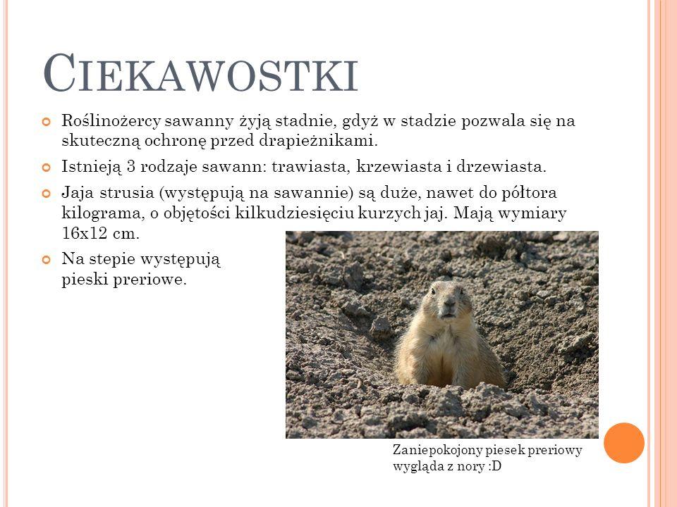 Ciekawostki Roślinożercy sawanny żyją stadnie, gdyż w stadzie pozwala się na skuteczną ochronę przed drapieżnikami.