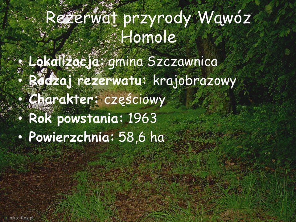 Rezerwat przyrody Wąwóz Homole