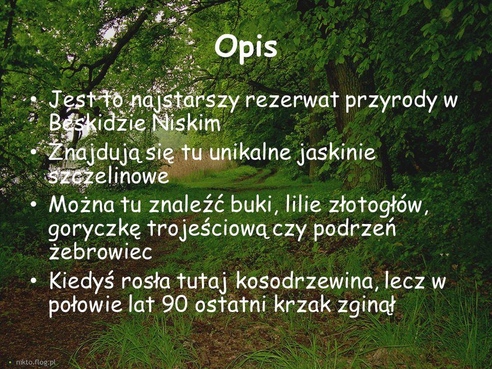 Opis Jest to najstarszy rezerwat przyrody w Beskidzie Niskim